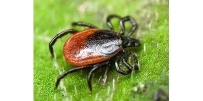 Borréliose de Lyme
